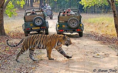 wild rajasthan